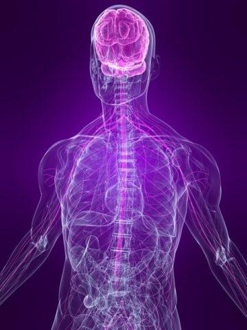 """筋膜リリースの本当の効果は""""脳""""が鍵!"""